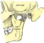 טיפולים במפרק הלסת TMJ